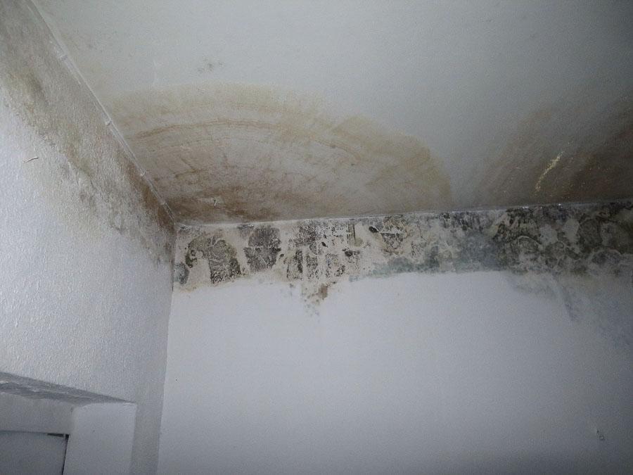 Schimmel an Kellerdecke und Kellerwänden durch undichten Badewannenablauf im Stock darüber